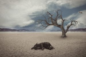 Drought scene with dead baby elephant